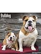 Bulldog 2021 Calendar