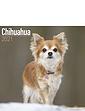 Chihuahua 2021 Calendar