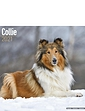 Collie 2021 Calendar