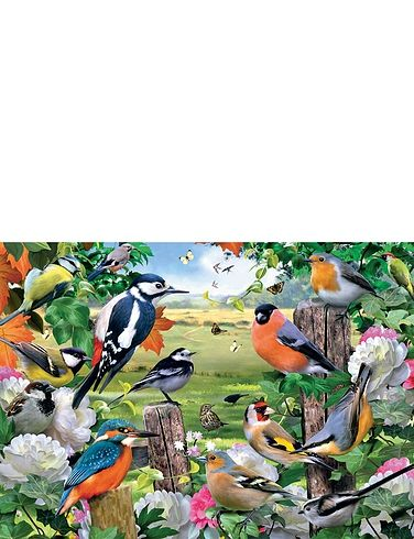 Bird of all Seasons