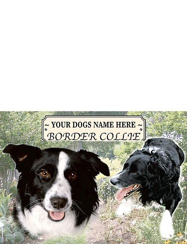 Border Collie Best Of Breeds Selection
