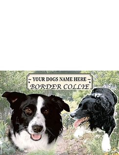 Best of Breeds-Border Collie