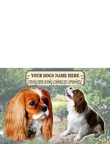 King Charles Spaniel Best Of Breeds Selection