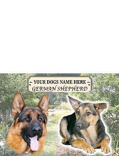 German Shepherd Best Of Breeds Selection