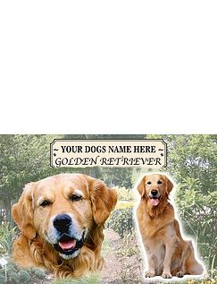 Golden Retriever - Best of Breeds
