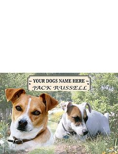 Jack Russell Best Of Breeds Selection