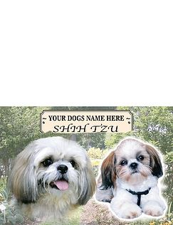 Shih Tzu - Best of Breeds