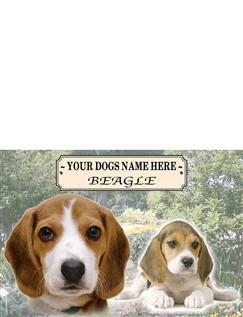Beagle - Best of Breeds