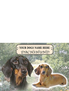 Dachshund Best Of Breeds Selection