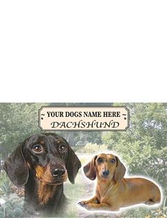 Dachshund - Best of Breeds