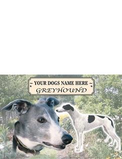 Greyhound - Best of Breeds