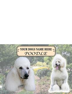 Poodle - Best of Breeds