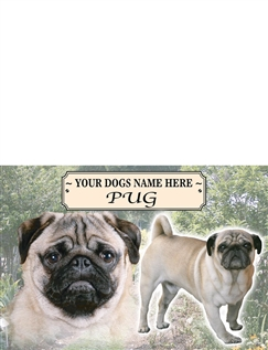Pug Best Of Breeds Selection
