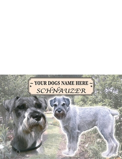 Schnauzer - Best of Breeds