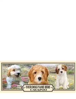 Cavapoo Best Of Breeds Selection