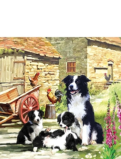 Border Collie Barn
