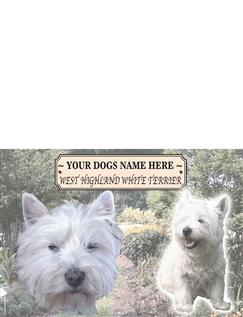 Highland Terrier Best Of Breeds Selection