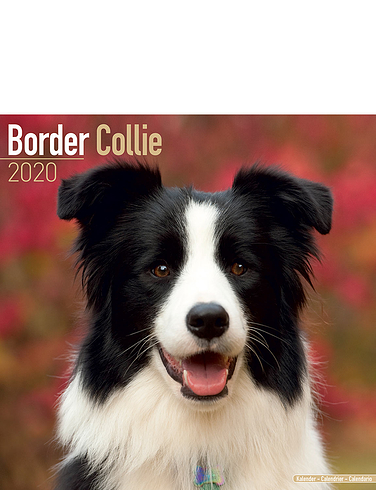 Border Collie Best Of Breeds Calendar