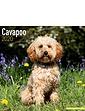 Cavapoo Best Of Breeds Calendar