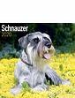 Schnauzer Best Of Breeds Calendar