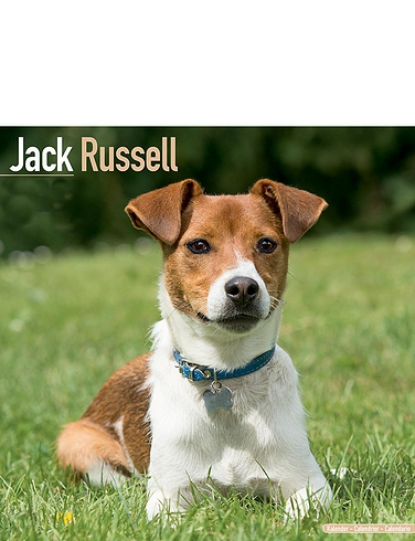 Jack Russell Calender