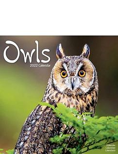 Owls Calendar
