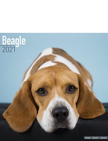 Beagle 2021 Calendar
