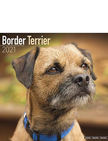 Border Terrier 2021 Calendar