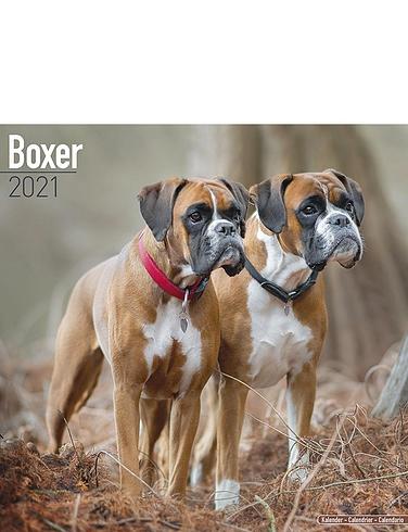 Boxer 2021 Calendar