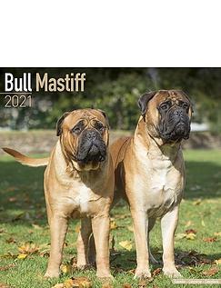 Bull Mastiff 2021 Calendar