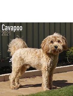 Cavapoo 2021 Calendar