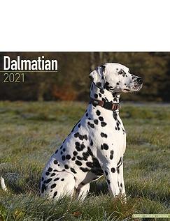 Dalmatian 2021 Calendar