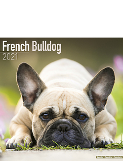 French Bulldog 2021 Calendar