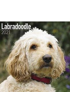 Labradoodle 2021 Calendar