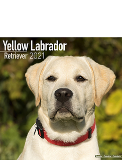 Yellow Labrador Retriever 2021 Calendar