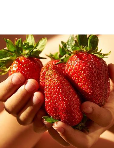 Giant Strawberry Colossus 12 Plug Plants