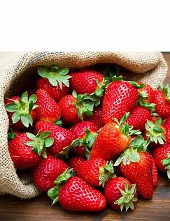 Everbearer Strawberry Sweet Summer 20